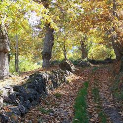 Sentiero H1 Bosco Estagli