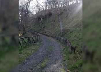 Monte Luparelli Orchi